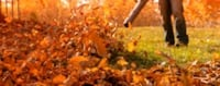 fall cleanup Springfield