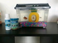 3 goldfish with food . & Tank Cherry Hill, 08003