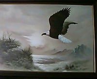 Early 1900 painting of North America Bald Eagle,
