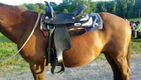 17in barrel/trail saddle Brookville, 15825