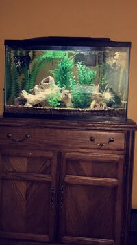 Fish Tank with driftwood/plants/heater/filter/LED lighting FISH NOT FOR SALE