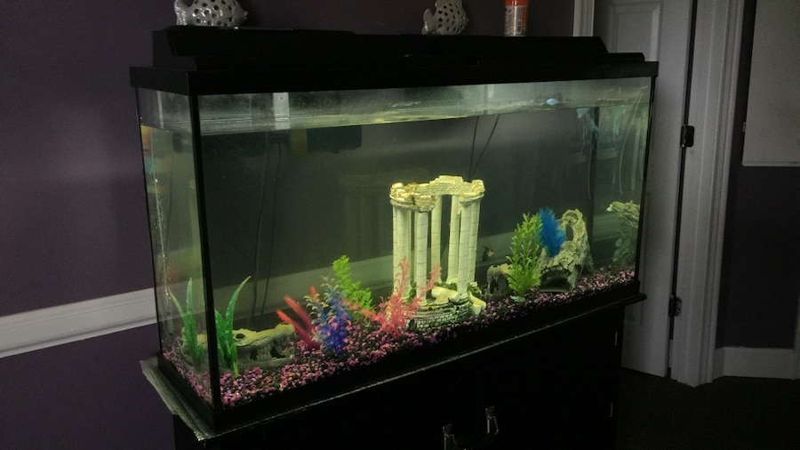 Letgo 65 gallon fish tank comes wi in north corners ga for 65 gallon fish tank