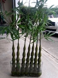 Faux Bamboo Plant (price negotiable) Lawrenceville, 30044