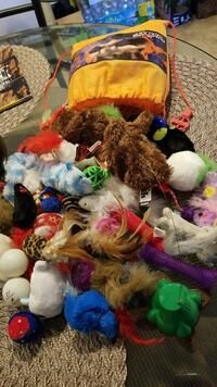 HUGE Lot of Cat toys