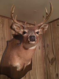 Mounted deer head Annandale, 22003