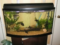 "46"" bowfront fish tank with stand & canister filter  Mississauga, L5P 1B2"