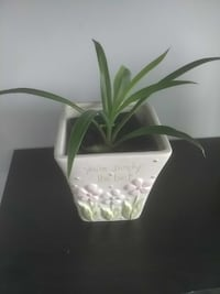 green linear leaf plant with ceramic pot Hampstead, H3X 1S2
