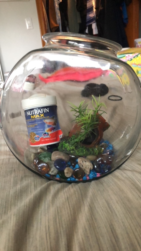 Fish bowl with rocks hide it and food