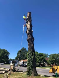 Tree cutting Washington