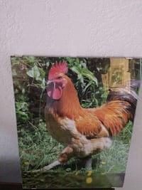 brown rooster photo Pharr, 78577