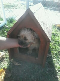 Puppy / Small Breed Red Wooden Dog House  Fresno, 93702