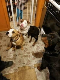Dog daycare Romulus