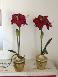 """Christmas Frosted Red Amaryllis 25"""" Tall."""