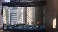 Amazing condition fish tank with 4 fish and more!!! Ajax, L1T 4L1