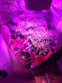 GROW TENT + LIGHT 2x2x4.5Ft London, N5V 3R6