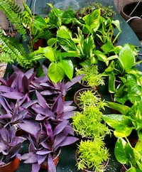 $3 each small colorful plants