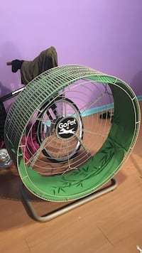 green and white running wheel for dogs New York, 10462