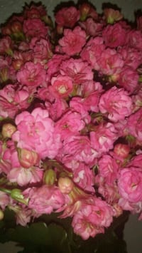 pink and yellow artificial flowers Cudahy, 90201