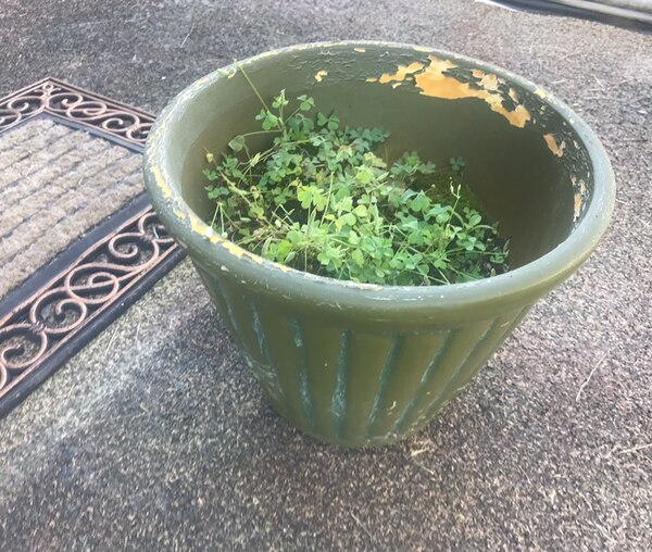 Worn Planter - about a foot tall