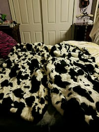Plush Cow Print Seat Covers