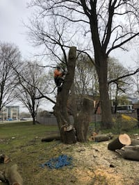 Stump removals, free quotes, prices vary based on location and size Oakville