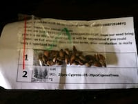 Cypress Tree Seeds & Sunflower Seeds  Red Deer