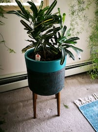 Plant, pot and stand. Spruce Grove, T7X 1C9