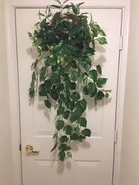 Home Décor: Artificial-Faux Hanging Pothos Ivy Plant in light wicker wall planter  Lansdowne