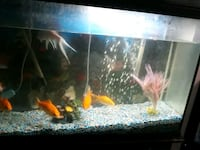 fish tank and filter and stand West Valley City, 84120