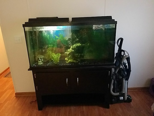 clear glass aquarium with black frame