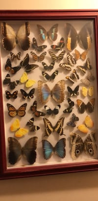 Butterfly collection Costa Rica 20 km
