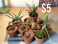 Succulents, Cacti and Agave for Sale! Beaverton, 97006