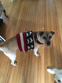 Dog sweater (Pending ) Frederick, 21701