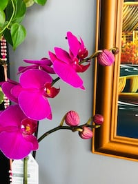 Orchid with a nice ceramic e Mississauga, L5C 1T8