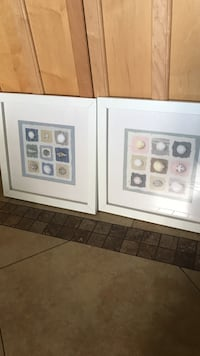 two paintings of seashells with white wooden frames