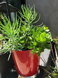 Assorted green plants on a red vase Los Angeles, 90026