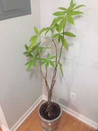 Moneytree including pot with silver finish