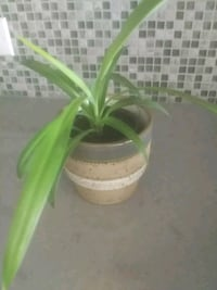 green and white plastic plant pot Hampstead, H3X 1S2