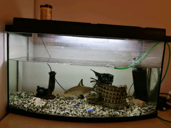 Big aquarium with 2 big fishes. Free/Grattis