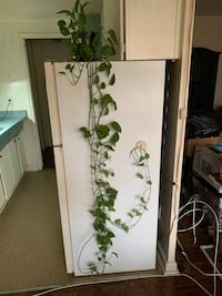 Hanging indoor plant