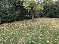 FALL GARDEN CLEAN-UP Oakville
