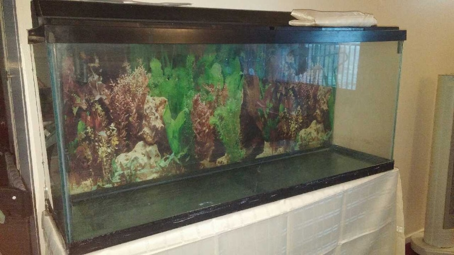 65 gallon fish tank and stand in new york for 65 gallon fish tank