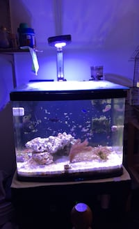 Saltwater fish tank aquarium, 29 BioCube