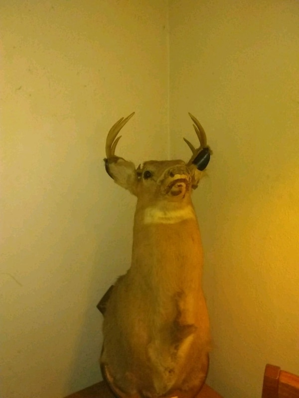 Taxidermy and mounted deer head and stand.