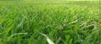 Lawn mowing Pittston