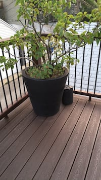 green and black plant pot Chicago, 60647