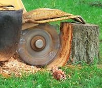 stump removal (credit cards accepted) Chesterfield