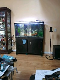 65 gallon Saltwater fish tank setup 196 mi