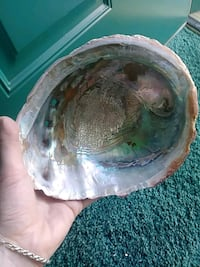 abalone shell large Oceano, 93445
