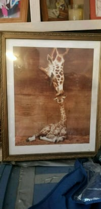 Beautiful giraffe and tiger pictures  Kingston, 30145